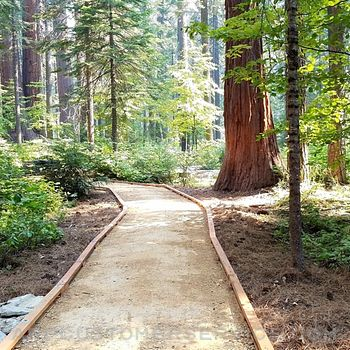 Calaveras Big Trees State Park Customer Service
