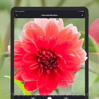 PlantIn: Plant Identifier ipad image 1