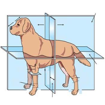 Veterinary Anatomy Quizzes Customer Service