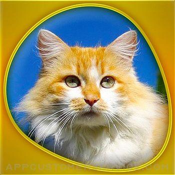 Animals 360 - Cats Gold Customer Service