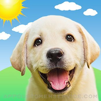 Weather Puppy Forecast + Radar Customer Service