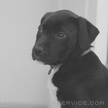 Puppy Calmer Customer Service
