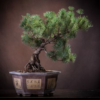 Bonsai Tree - A Guide to Growing Bonsai and Making Bonsai Customer Service